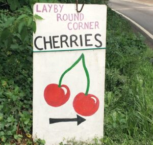 Layby style sign of a Cherry sellers stall