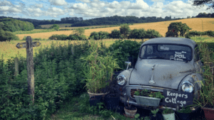 winner of photography competition, old car in the middle of green fields