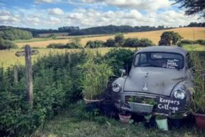 landscape view with old car