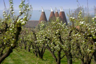 Oast Houses near an orchard